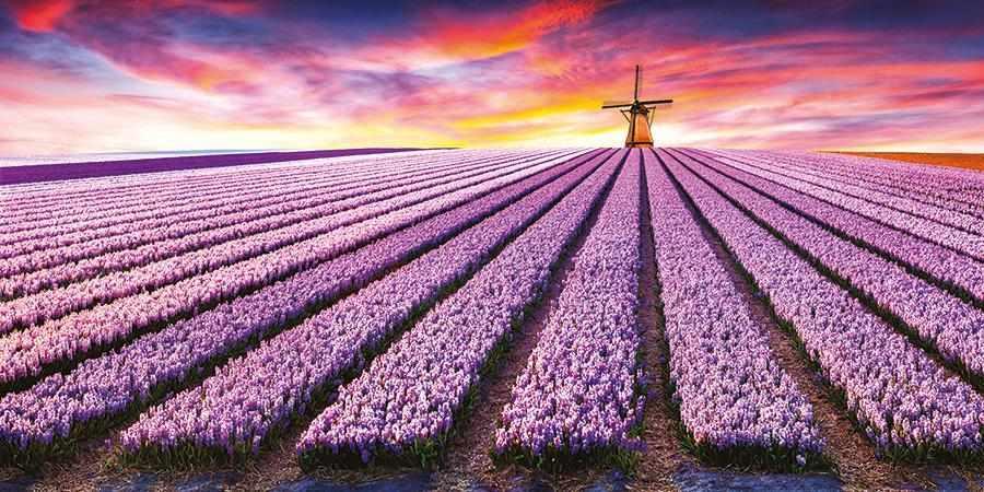 obraz Větrný mlýn