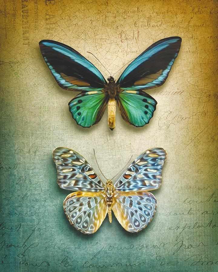 obraz Dva motýli