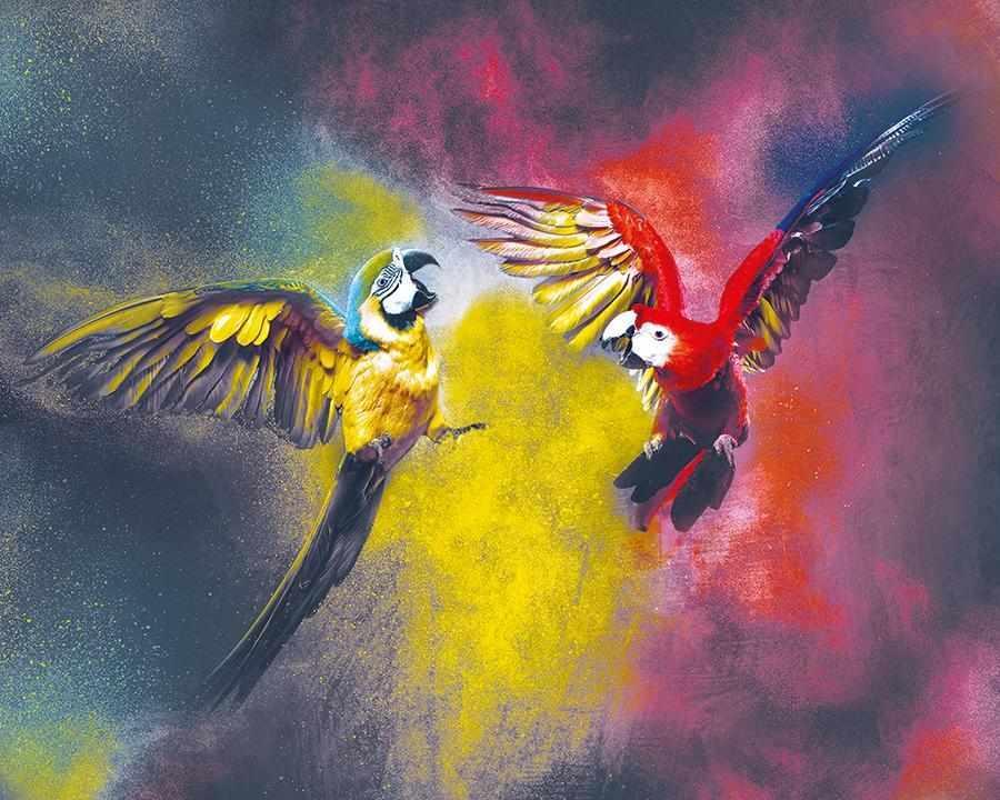 obraz Papoušci