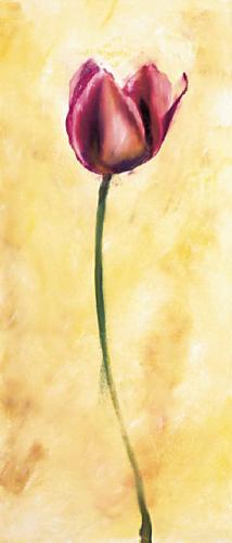 obraz Fialový tulipán