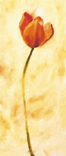 obraz Červený tulipán
