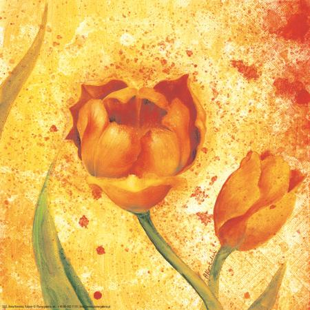 obraz Barevný tulipán