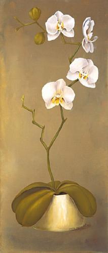 obraz Biela orchidea