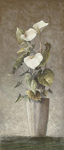 obraz Anthurium andreanum