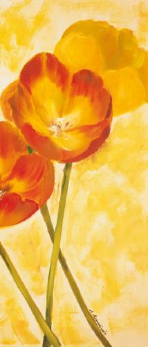 obraz Tulipány 2ZD