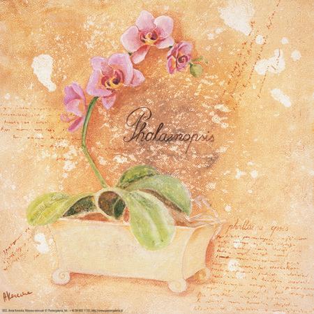 obraz Růžová orchidej dekorace