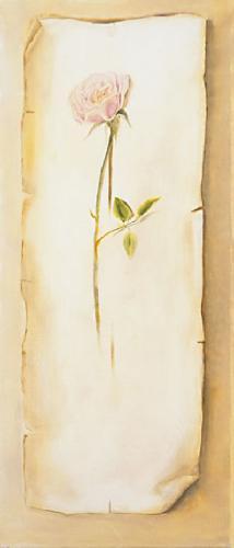 obraz Ruža stredná