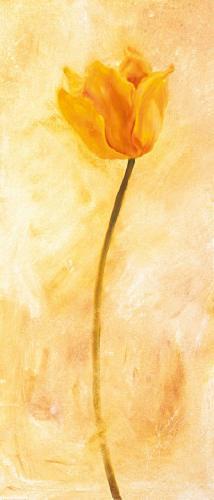 obraz Žltý tulipán
