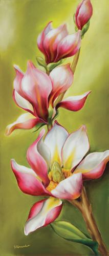obraz Růžová magnólie